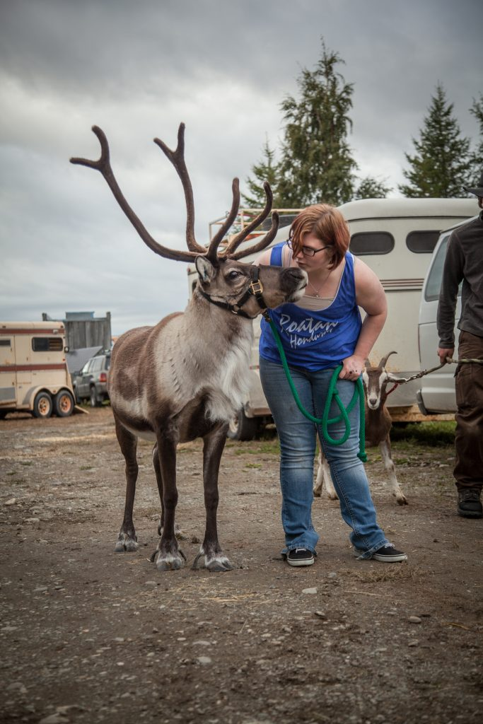 The day before the opening at The Alaska State Fair, Palmer, Alaska