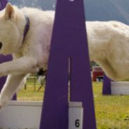 Alaska Dogs Gone Wild