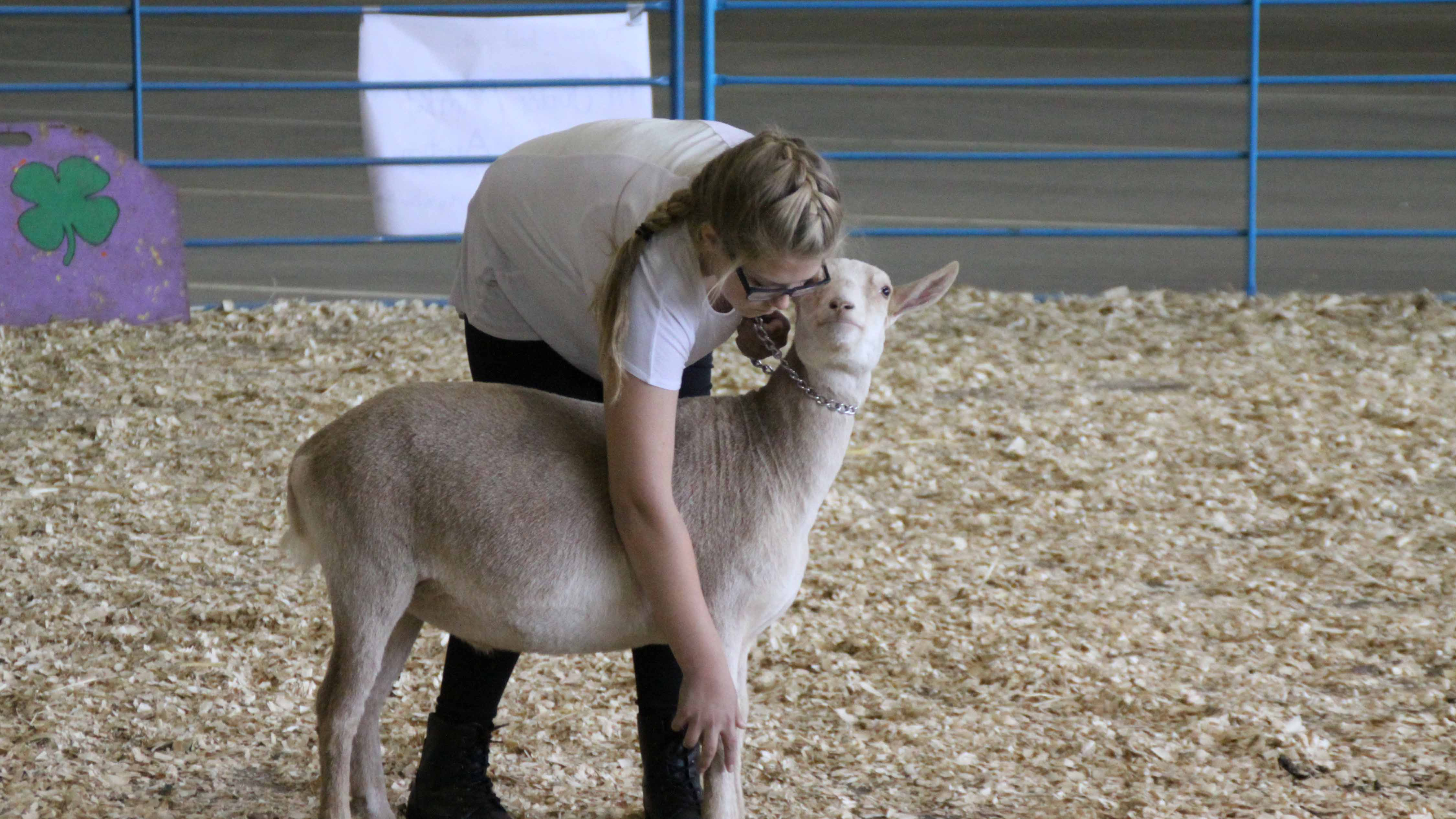 Image result for livestock show tent