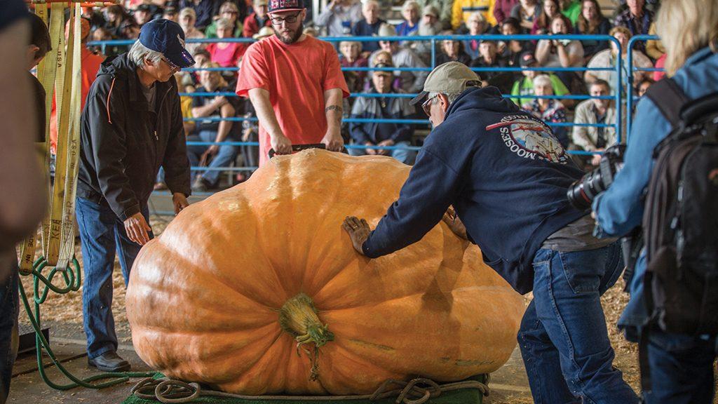 Pumpkin Weigh-off Feature Box