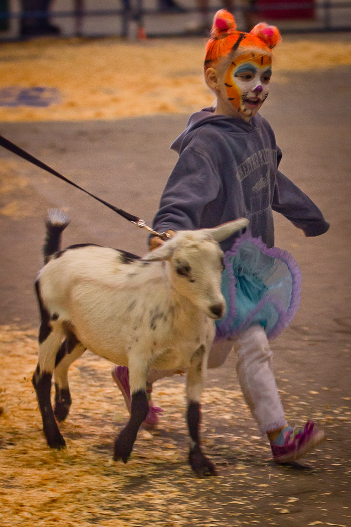 Little tiger girl with goat | Alaska State Fair