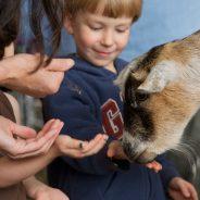 GCI Petting Zoo